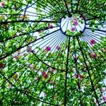 風水*緑の力は癒しと健康