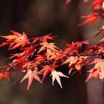 【今週の運勢】10月16日~10月22日*易占い