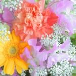 【運命の花はコレ!!】あなたの花言葉診断