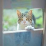【あなたが猫ならどんな猫?】猫診断