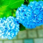 12星座【6月28日の運勢】★幸せを運ぶタリミラの毎日占い★