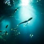 夏におすすめ!東京・神奈川の水族館デート