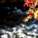 12星座【10月21日の運勢】★幸せを運ぶタリミラの毎日占い