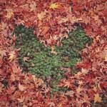 【毎日風水】10月30日~11月5日のおすすめ風水