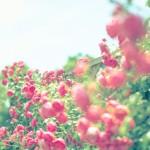 【今週の運勢】9月25日~10月1日*易占い