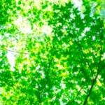 今日も一日HAPPYに★【気学】(2月22日の運勢)希翔の毎日メッセージ