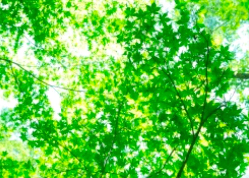 今日も一日HAPPYに★【気学】(2月23日の運勢)希翔の毎日メッセージ