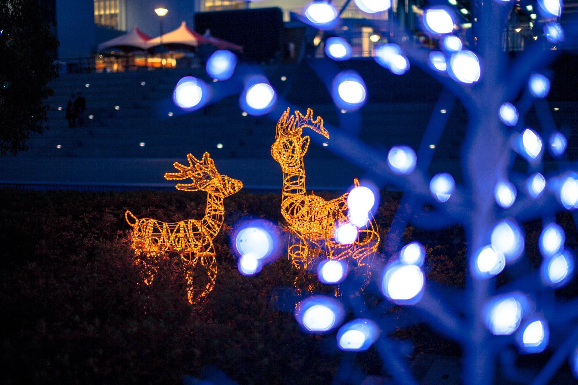 クリスマス恋予報2016♪縁と出会いの12星座の恋愛運