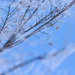 12星座【1月12日の運勢】★幸せを運ぶタリミラの毎日占い