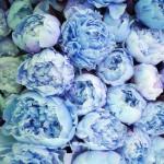 【カラー診断】「どうしようもなく気になる色」はありませんか?青色に隠された深層心理って?