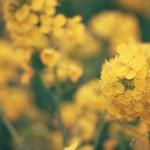 フラワーセラピストのオラクルカード診断 (10月2日~10月8日)