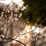 12星座【3月7日の運勢】★幸せを運ぶタリミラの毎日占い