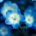 12星座【3月23日の運勢】★幸せを運ぶタリミラの毎日占い