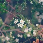 12星座【4月11日の運勢】★幸せを運ぶタリミラの毎日占い
