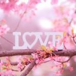 12星座【4月14日の運勢】★幸せを運ぶタリミラの毎日占い