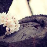 12星座【4月21日の運勢】★幸せを運ぶタリミラの毎日占い
