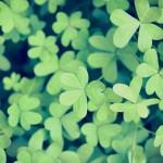 12星座【4月23日の運勢】★幸せを運ぶタリミラの毎日占い