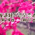 【今週の恋愛運】3月14日-3月20日の恋愛運【芦屋道顕の音魂占い】