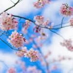 春の楽しみ! お花見デートを成功させる5つのコツ