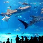 都内で楽しめる水族館デートのオススメ!3選