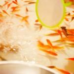 金魚すくいでとった金魚を育てたい!飼育のコツを伝授しましょう
