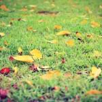 12星座【10月11日の運勢】★幸せを運ぶタリミラの毎日占い