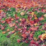 12星座【10月14日の運勢】★幸せを運ぶタリミラの毎日占い