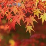 この秋行きたいおすすめパワースポット【東京編】
