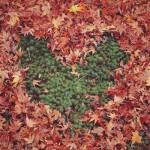 12星座【10月25日の運勢】★幸せを運ぶタリミラの毎日占い