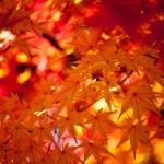 12星座【10月27日の運勢】★幸せを運ぶタリミラの毎日占い