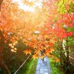 【毎日風水】11月6日~11月12日のおすすめ風水