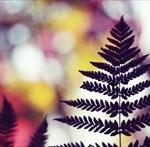 12星座【12月17日の運勢】★幸せを運ぶタリミラの毎日占い